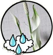 Naturliga luftrenare: Luftfuktare